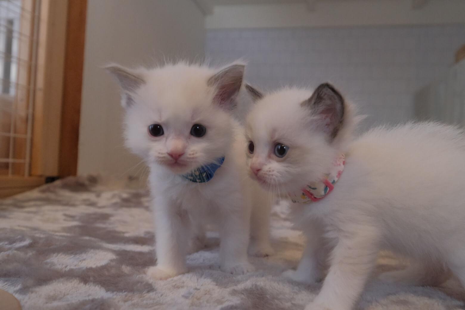 Kitten House
