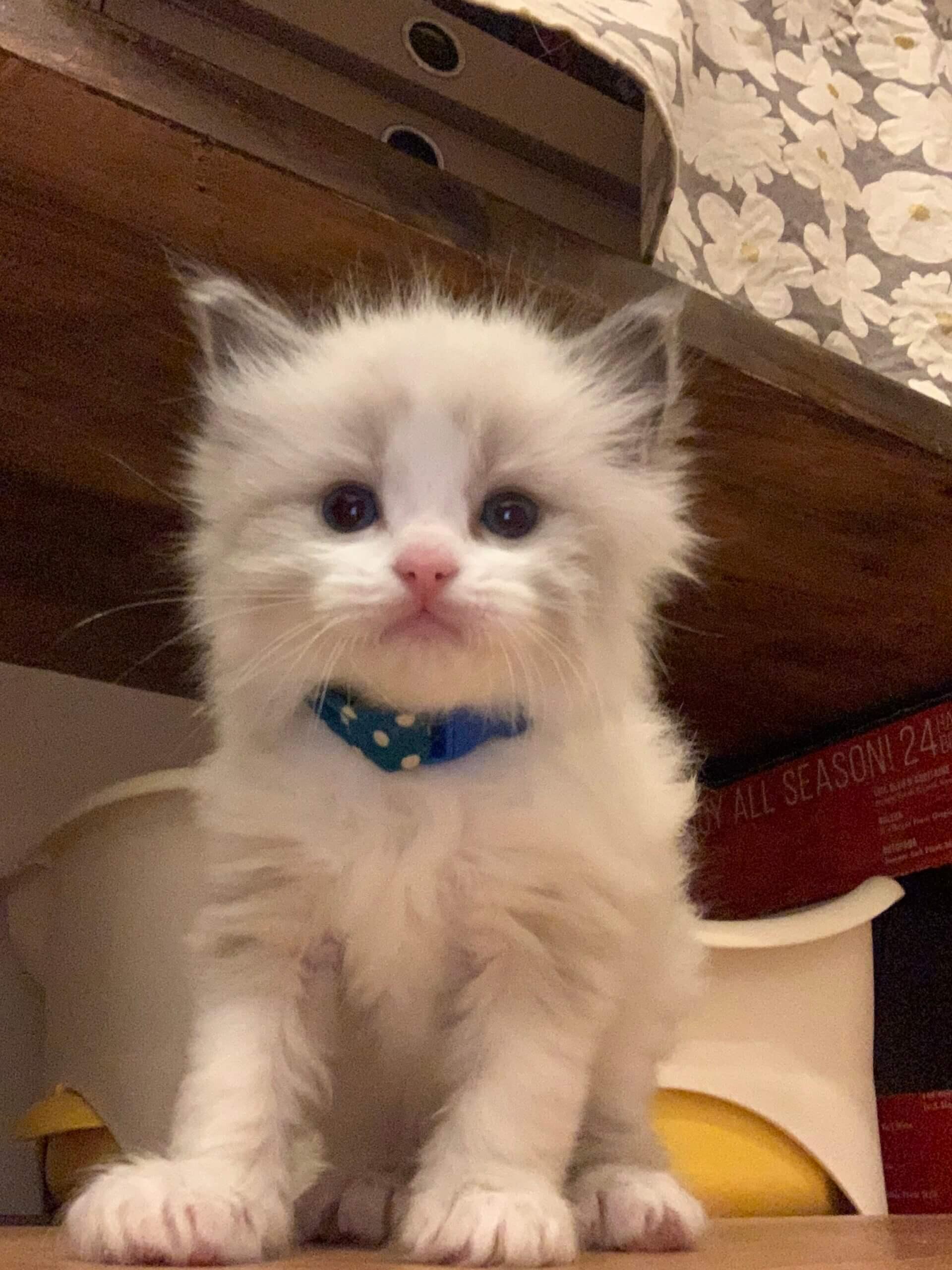kitty-thumbnail